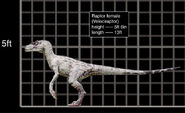 Velociraptor female comparacion
