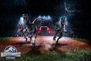 Wallpaper batlle events raptors den 22360987416 o