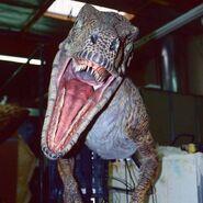 Raptor anim