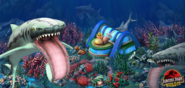 How many Helicoprion are there