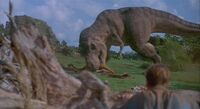 Tyrannosaurus Eating Galliminus