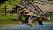 JWEPolacanthus