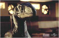 Velociraptor pose
