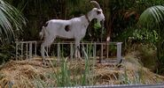 Goat whats-going-to-happen-to-the clink large