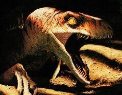Raptor tlw3