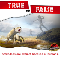 Smilodon are extinct because of humans