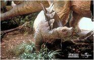 Stegosaurus baby portrait