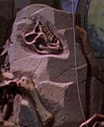 JP Heterodontosaurus skull