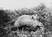 Roosevelt safari elephant2