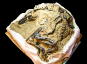 Bloody Mary fossil