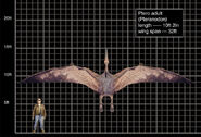 Ptero adult-1-