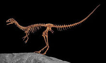 Compsognathus-0