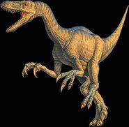 Velociraptor joe