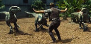 What-is-the-indominus-rex-theory-and-breakdown-jurassic-world-nicky-t-85900361-417e-444e-9d80-9c6edd35d390