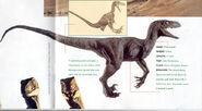 Velociraptor art galery 3