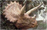Triceratops portrait
