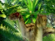 Raptor og