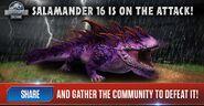 Salamander 16 News