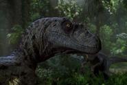 Velociraptor-en-Jurassic-Park