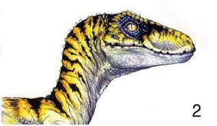 Raptor art