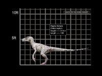 1024x768 Velociraptor female size chart