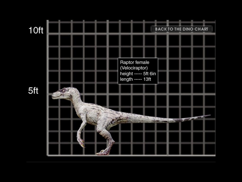 Image - 1024x768 Velociraptor female size chart.jpg ...