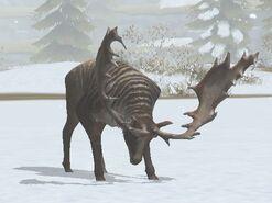 Megaloceros-30