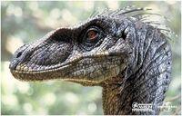 Velociraptor portrait