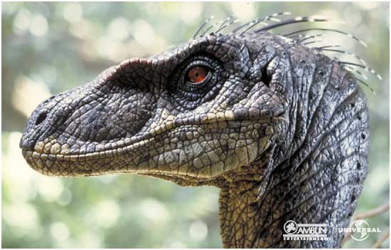 Archivo:Velociraptor portrait.jpg