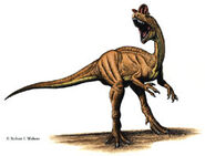 Dilophosaurus-0