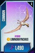 Limnorhynchus-1
