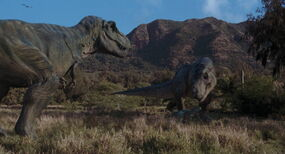 Tyrannosaurus-family