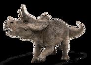 Triceratops bebe