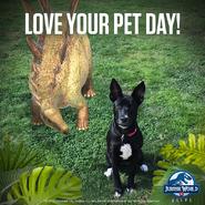 Stegosaurus Pet Day