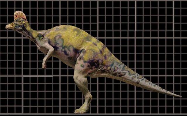 File:Corythosaur7hv-1-.jpg