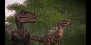 Raptor jwe 2
