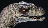 Velociraptor-jp2