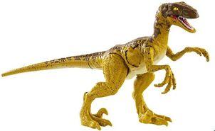 Raptor 2018bdraptor
