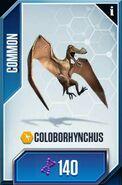 Coloborhynchus card 1901947 988665174499604 399973921815068184 n