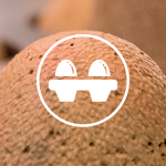 Egg Spinner icon