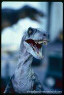 Raptor D G0EPxXoAARgKM
