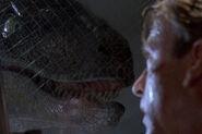 Raptor grant