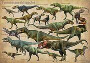 Tyrannosauroid species