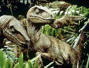 JP-Velociraptors