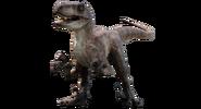 Jurassic park velociraptor 2 by camo flauge dcsll3m-fullview