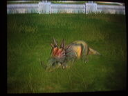 Styracosaurus sleeping