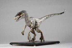 Raptor 6321823 1 x