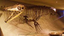 Mosasaurus hoffmannii