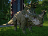 JWESinoceratops