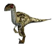 Raptor jpog